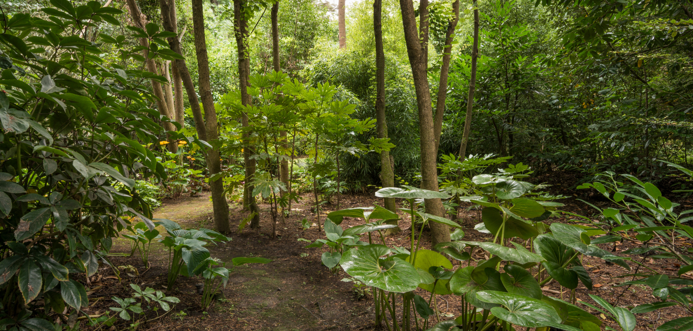 Many paths wend through Otahuna's woodland gardens