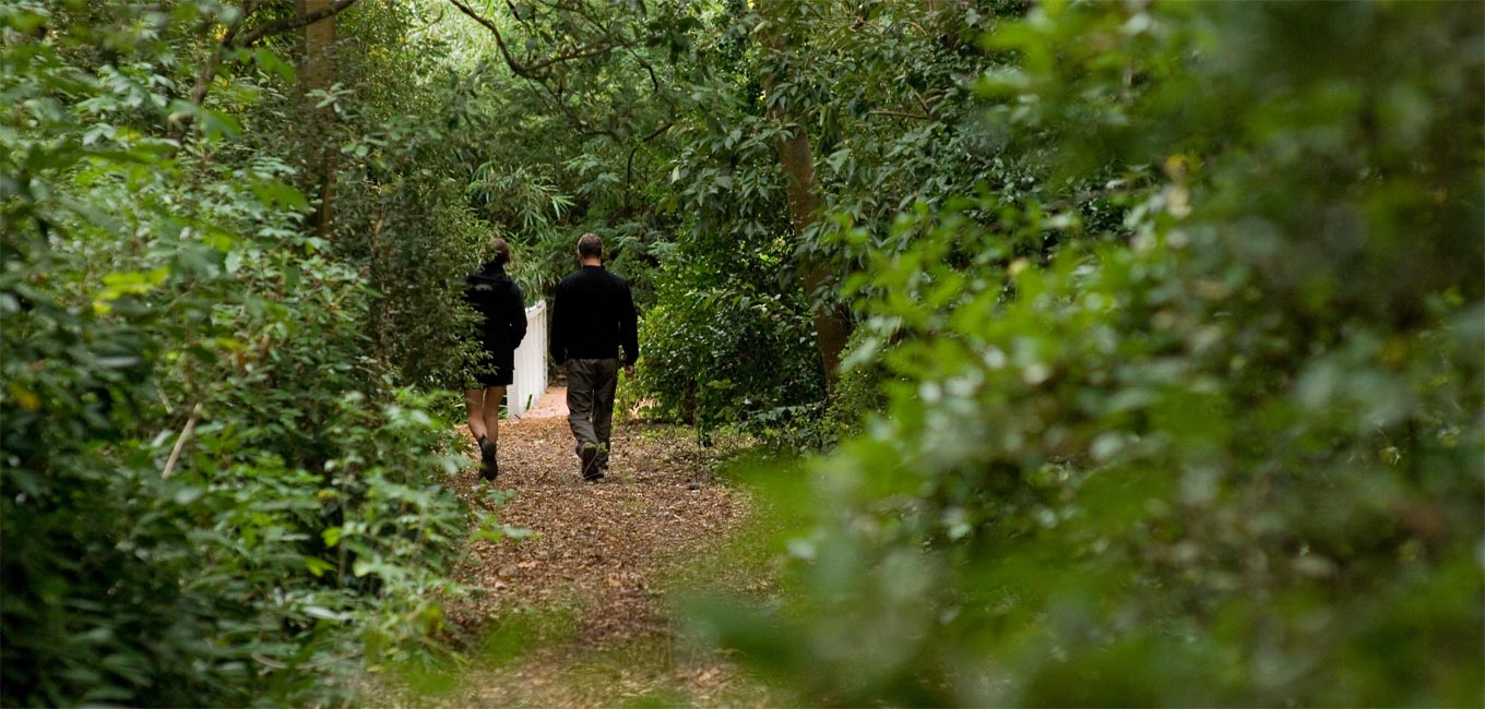 Couple walking in the woodlands near Otahuna Lodge in New Zealand