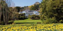 Daffodils in the gardens of Otahuna Lodge.